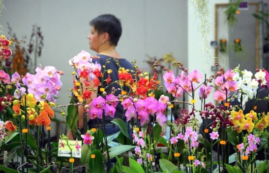 Orchidee_2494