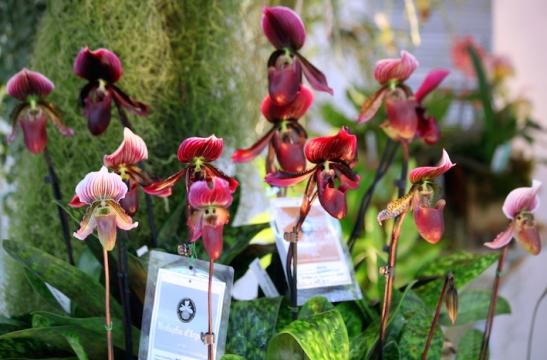 Orchidee_2523