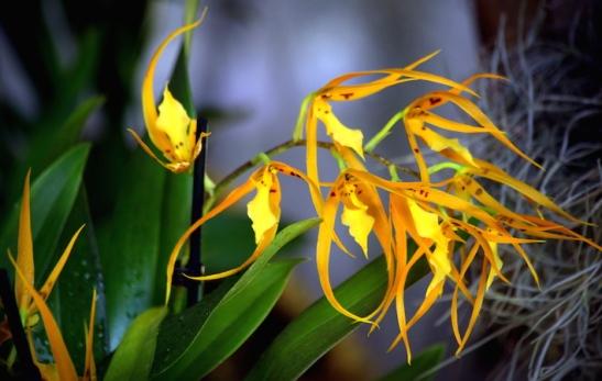 Orchidee_2532