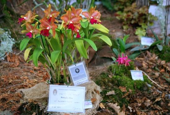 L'orchidea più bella