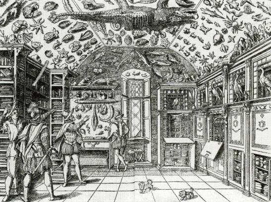 Wunderkammer XV.jpg