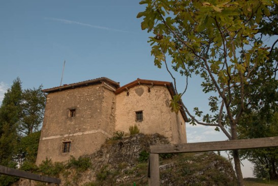 Priante alba-5077.jpg