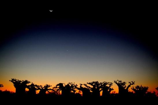 Tomiello alba in Madagascar_5933.JPG