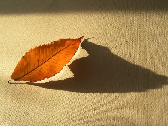 Bicego 003 ombra foglia- pipistrello.JPG