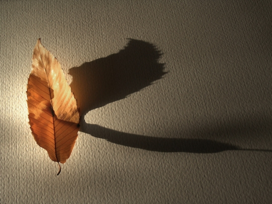 Bicego 004 ombra foglia.JPG