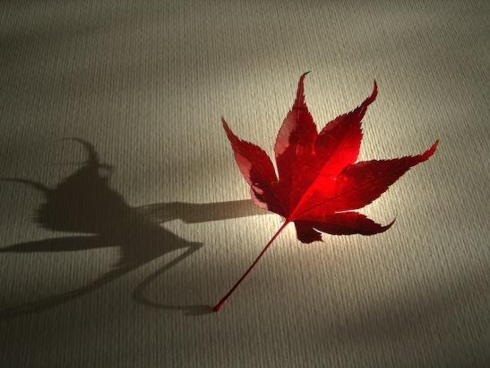 Bicego 005 ombra foglia- il ragno.JPG