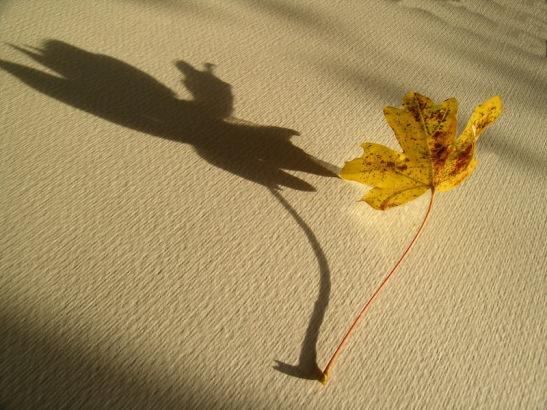 Bicego 013 ombra di foglia - Il solista.JPG
