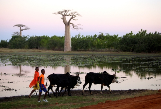 Tomiello Baobab_4805.JPG