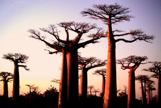 Tomiello Baobab_4842.JPG