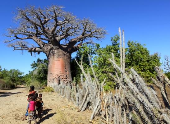 Tomiello baobab_5800.JPG