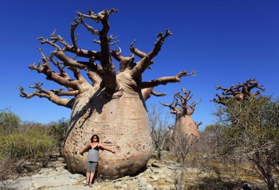 Tomiello Baobab_5828.JPG