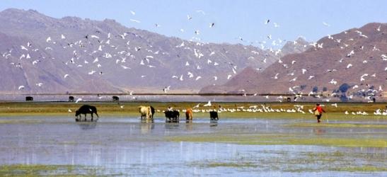 Tomiello Lago Titicaca234.jpg
