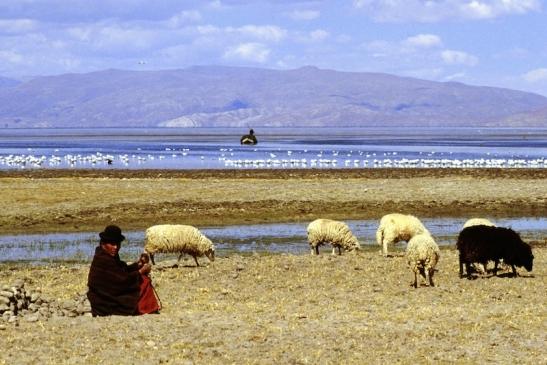 Tomiello Lago Titicaca241.jpg