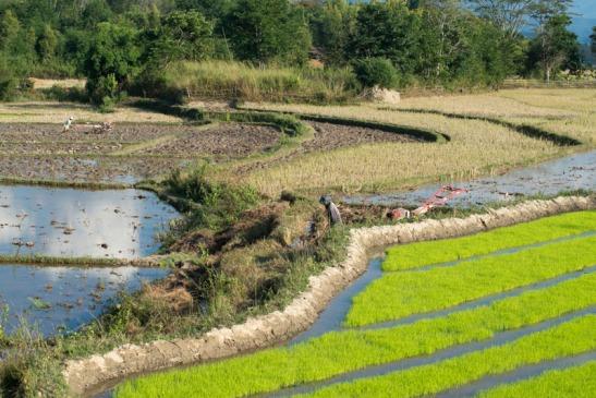 Priante_Birmania-0982.jpg