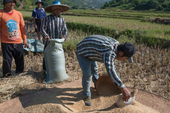 Priante_Birmania-1006.jpg
