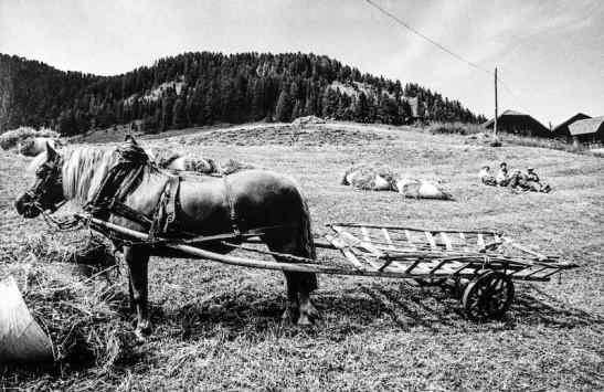 Campagna Val Badia 01 (11)