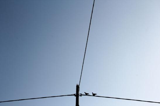 Bassan Uccelli-5476