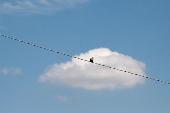 Bassan Uccelli-6402