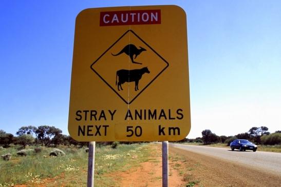 Tomiello Australia_009