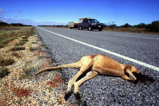 Tomiello Australia_010