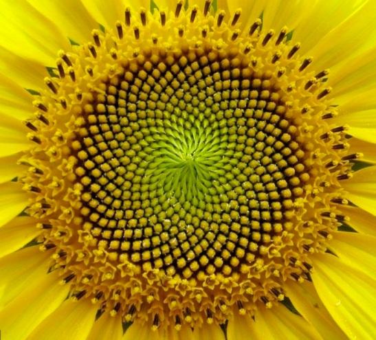 Simmetria di un fiore.jpg